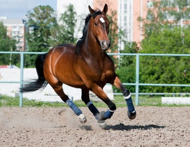 Types of Insurance for Horses